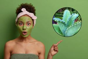 Kalanchoe in cosmetics