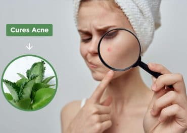 5 Proven Ways Kalanchoe Can Cure Acne and Combat Other Skin Problems